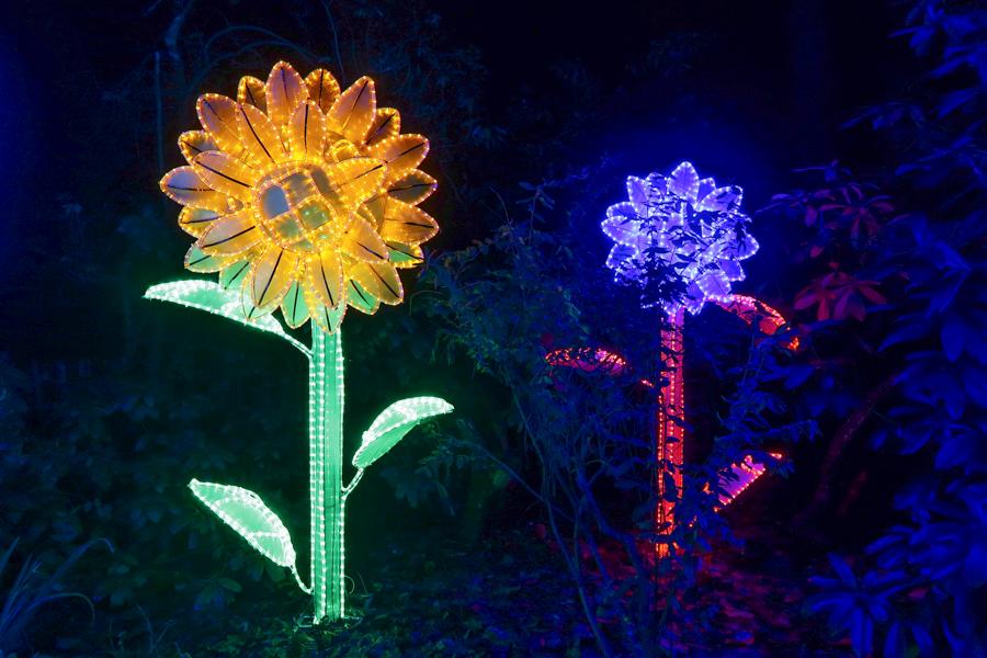 Magical Lantern - Flower Display