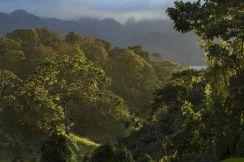 Monteverde-Bosque