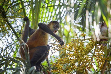 Mono-Araña-1