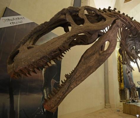 dinosauri-a-gubbio-00002-1024x868