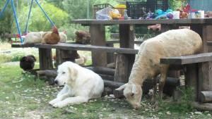 Agriturismo Podere Morgana, gli animali insieme
