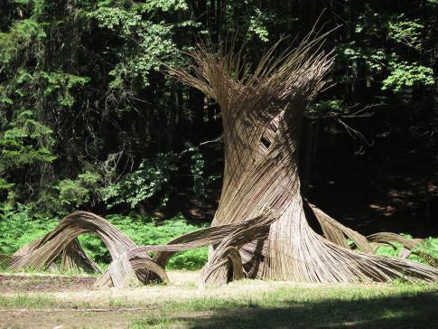 trentino_cimbra_sentiero_respiro_alberi