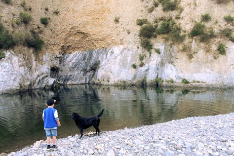 in-vacanza-col-cane-in-montagna2