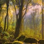 43 idee per un weekend con i bambini lazio bosco del sasseto