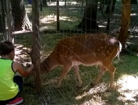43 idee per un weekend con i bambini puglia foresta umbra gargano