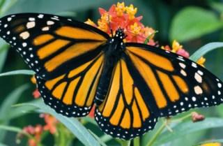 Butterfly House Sardegna5