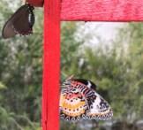 Casa Farfalle Roma