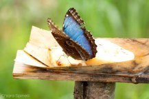 msns-mesocosmo-butterflyhouse-8