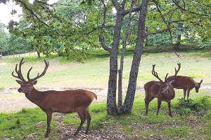 velocità incontri eventi cervo rosso Capricorno femminile dating uomo Acquario