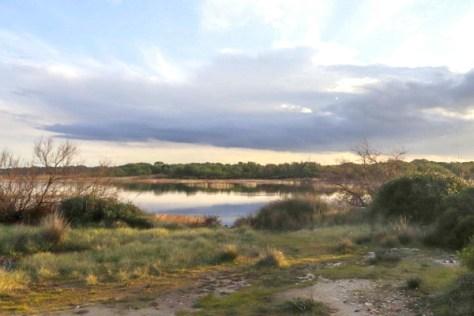 Lecce-oasi wwf-Le cesine-ph.Francesco Antonio Laporta