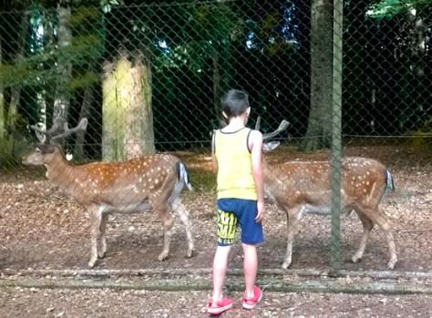 gargano-foresta-umbra-daini2