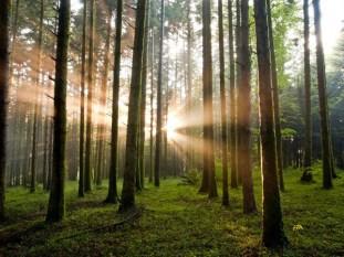 Parco regionale delle Serre-boschi