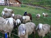 vecchie_fattorie_lombardia_fattoria_felicità_pecore