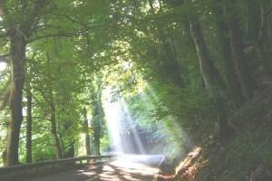 Parco Nazionale della Sila