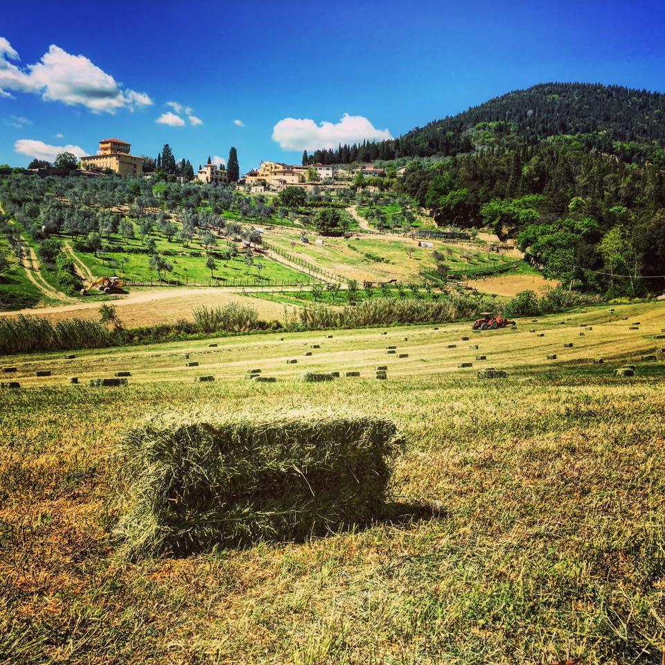 Firenze con i bambini fattoria di maiano