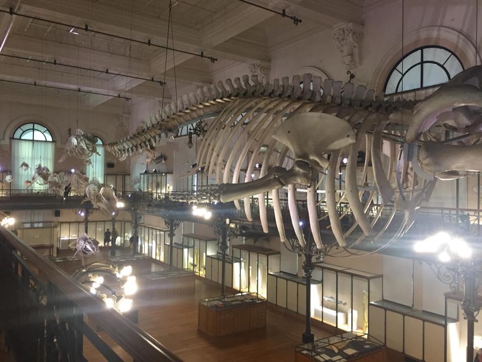 Firenze con i bambini museo storia naturale