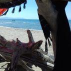 Toscana per bambini Parco della Maremma spiaggia protetta Campolungo
