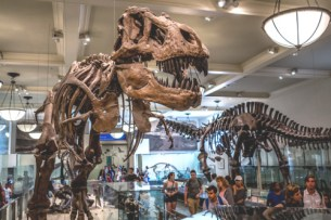 Viaggio a New York per famiglie-American Museum of Natural History