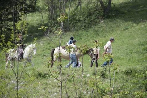 Marche-parco_avventura_cingoli_passeggiate_a_cavallo