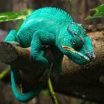 Marche-Zoo Falconara-camaleonti-ph-luca