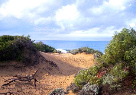 Parco_naturale_rimigliano-dune