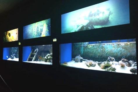 Acquario Salento- vasche