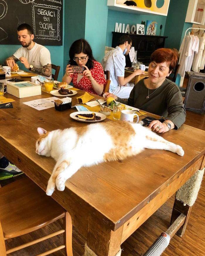 neko cafè-Crazy-Cat-Cafe-Milano-6