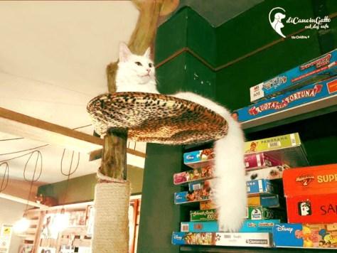 Neko-cafe-Di-Cane-in-Gatto-Cat-Cafe-2