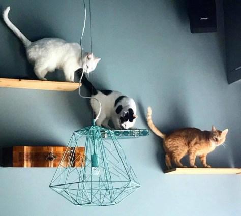 neko cafè-Romeow-cat-bistrot-Roma-2