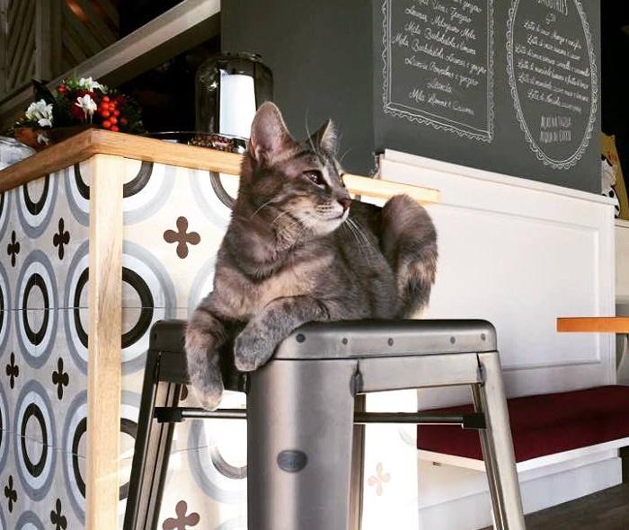 neko cafè-Romeow-cat-bistrot-Roma-8