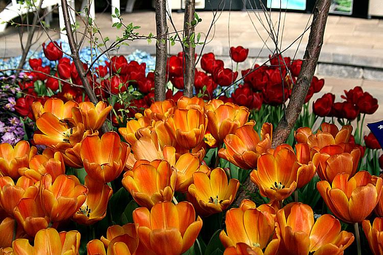 indiana flower patio show mar 11 19