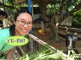 小澤農場 - 與羊合照