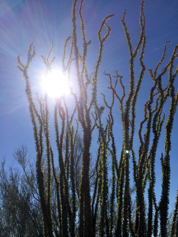 Great hiking trails in the beautiful McDowell Sonoran Preserves in #ScottsdaleAZ