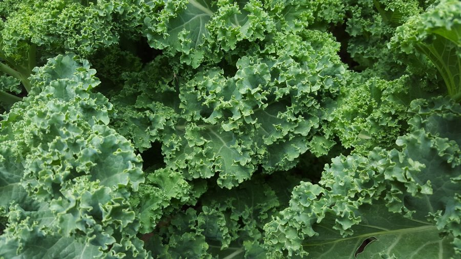 January -- What's in Season Guide: Kale