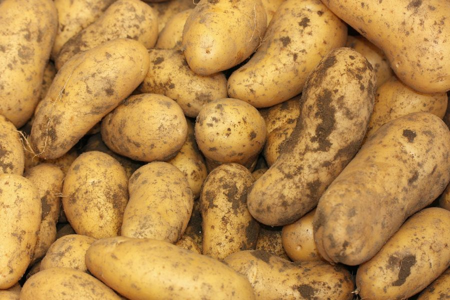 January -- What's in Season Guide: Potatoes
