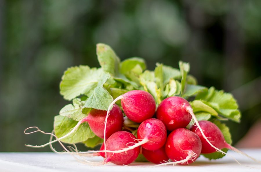 January -- What's in Season Guide: Radishes