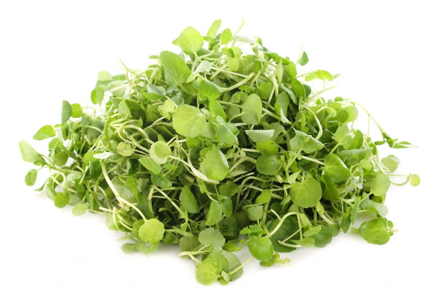 What's in Season -- Watercress