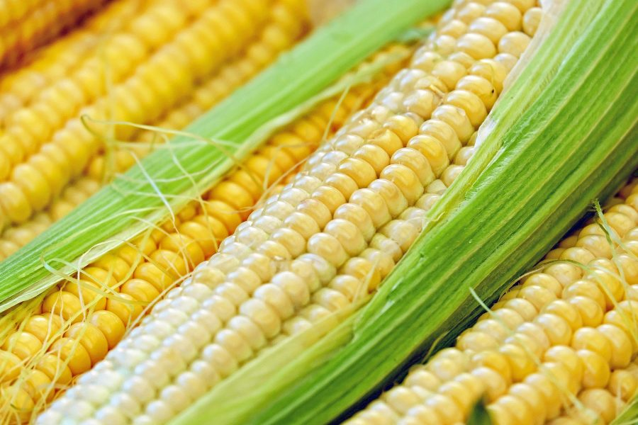 What's in Season -- Corn