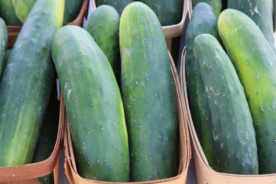 What's in Season -- Cucumber