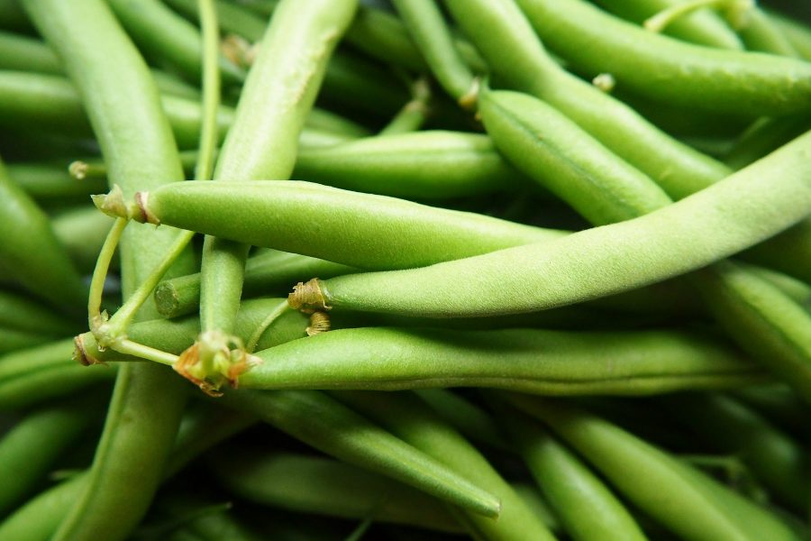 What's in Season -- Green Beans