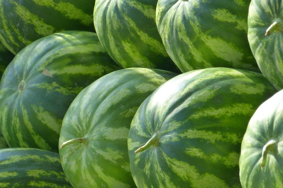 What's in Season -- Watermelon