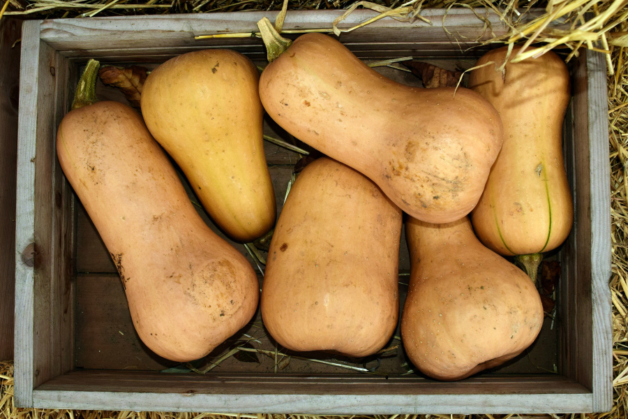 What's In Season -- Butternut Squash