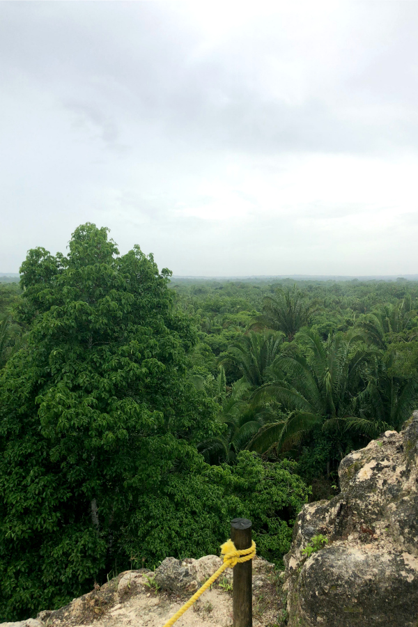 Tree Line from the top of the High Temple, Lamanai Belize