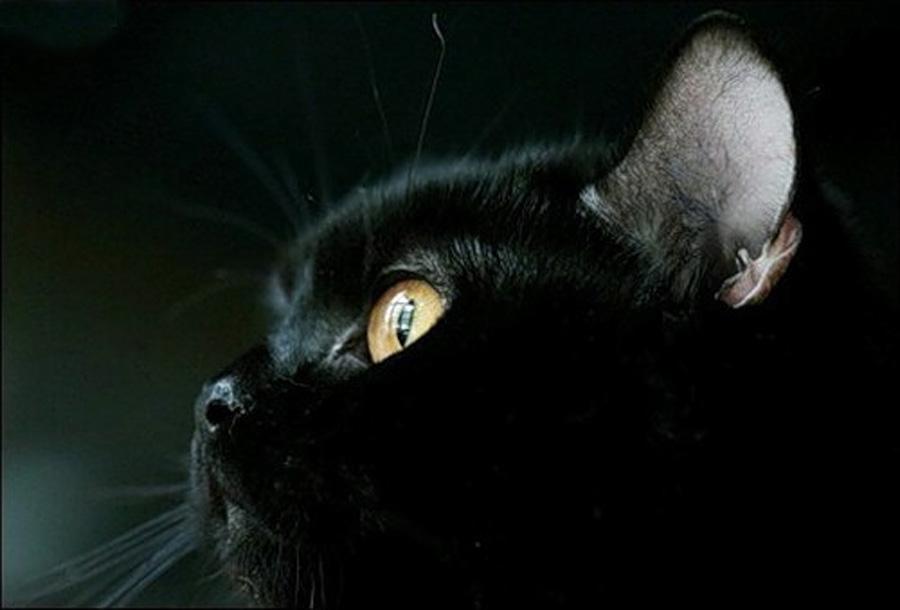 vlak crnih maca
