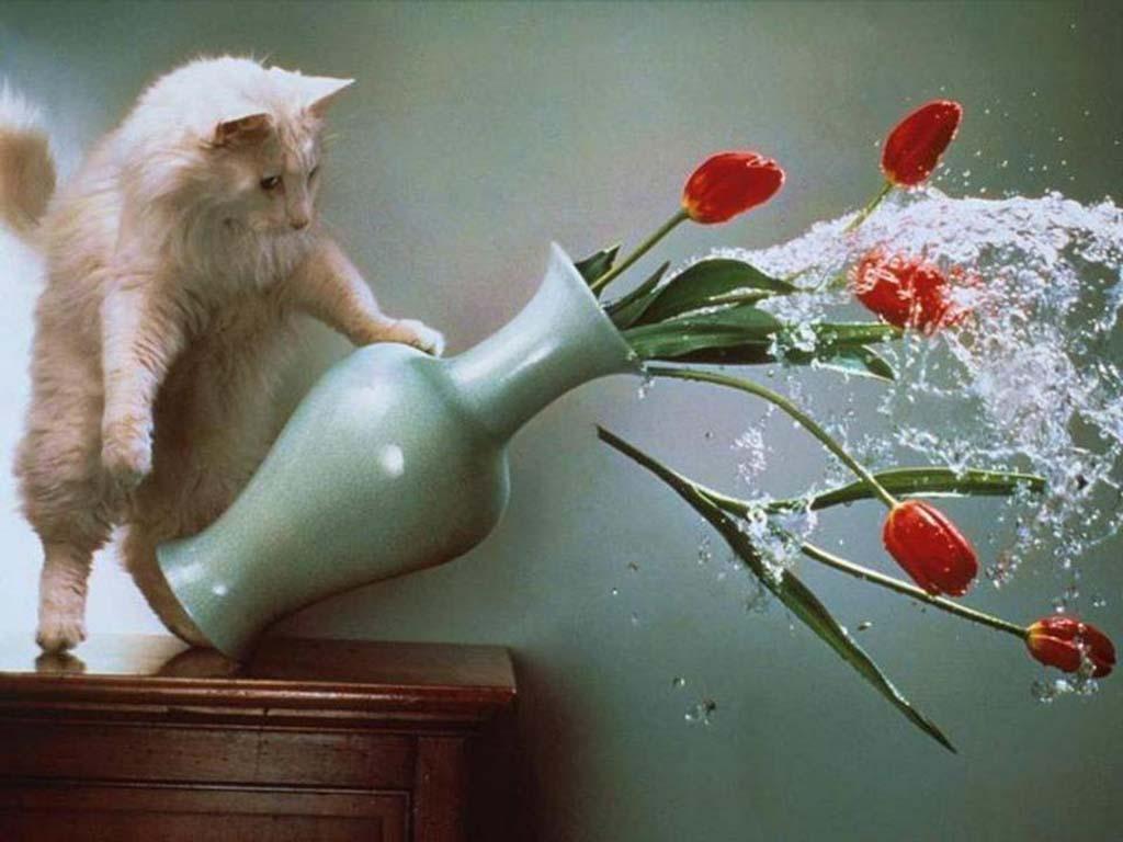 Почему кошки так любят опрокидывать вещи