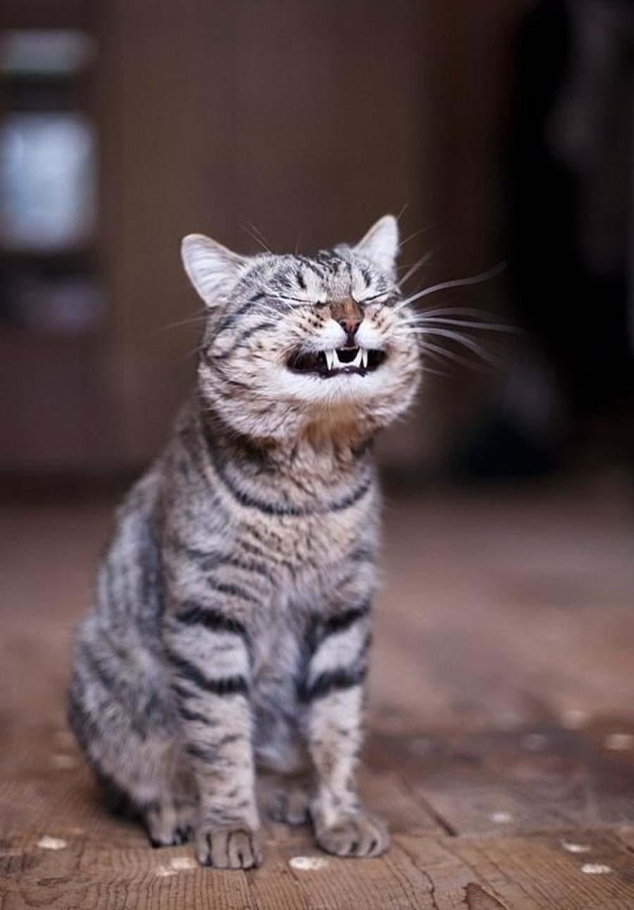 Почему у кошки сухой нос и стоит ли беспокоиться?