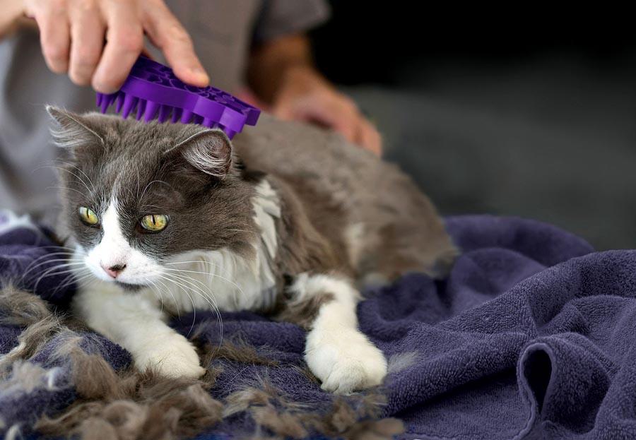 У кота на хвосте жирная шерсть и коричневые пятна