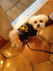 Thanks to Allison Junio for the pic of this pup.