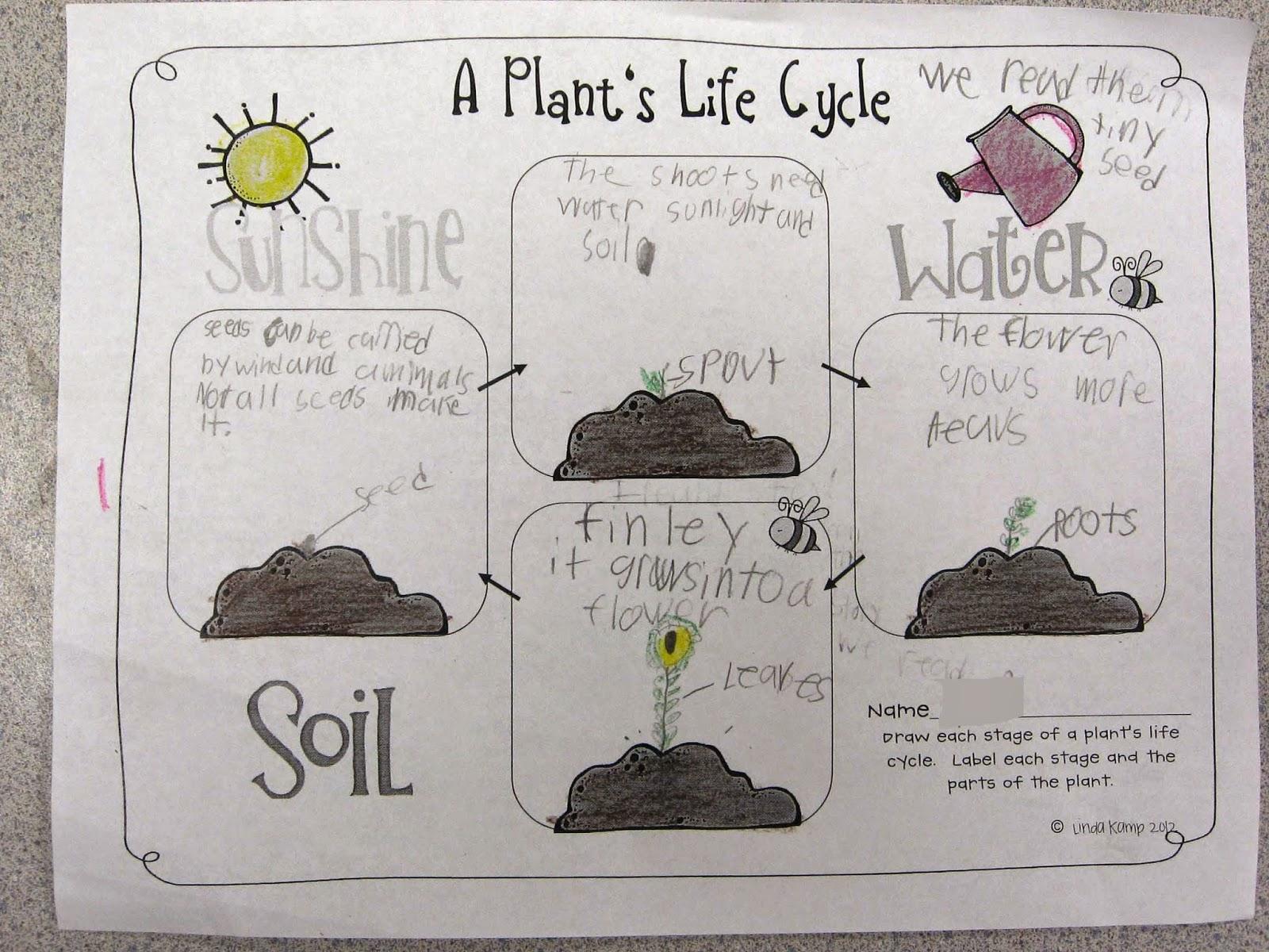 Worksheets Plant Life Cycle Worksheet Waytoohuman Free