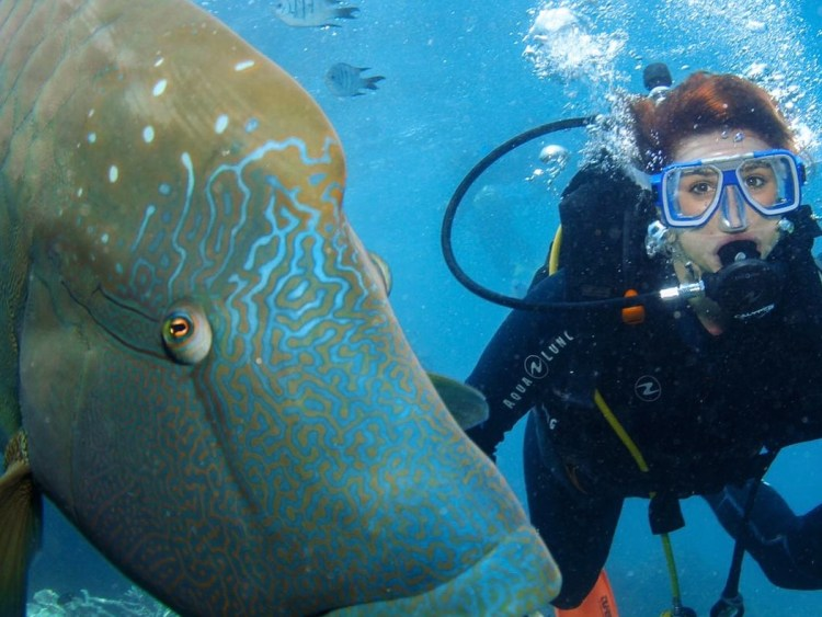 Image shows me scuba diving with a Humphead Wrasse at The Great Barrier Reef.